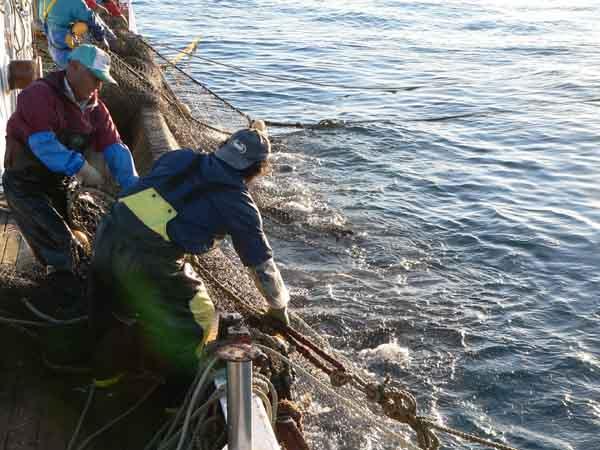漁業への影響: TPPは日本を破壊...
